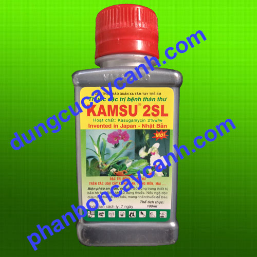 Tri-nam-lan-Kasu-2SL